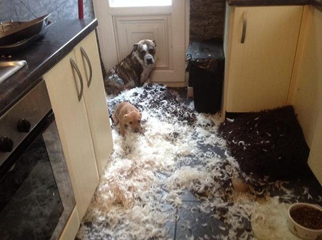 dog-pillow-exploded-funny-animal-hund-kissen-explodiert-3