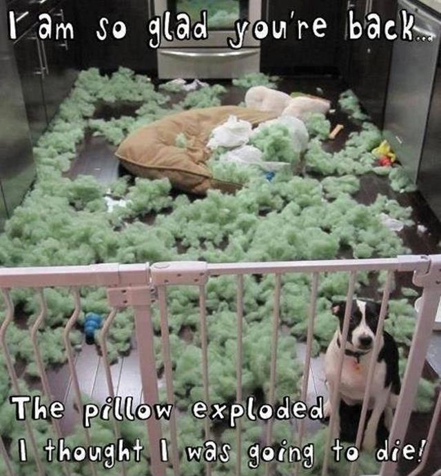 dog-pillow-exploded-funny-animal-hund-kissen-explodiert-8