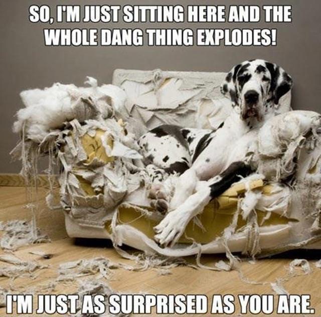 dog-pillow-exploded-funny-animal-hund-kissen-explodiert-9