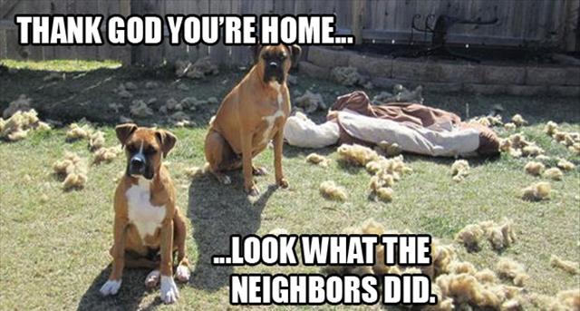 dog-pillow-exploded-funny-animal-hund-kissen-explodiert-9g