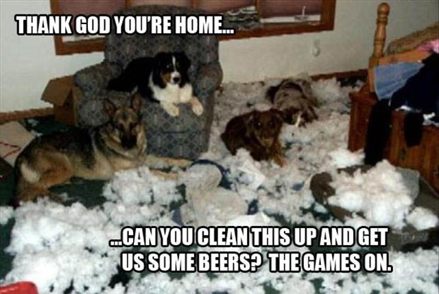 dog-pillow-exploded-funny-animal-hund-kissen-explodiert-9h