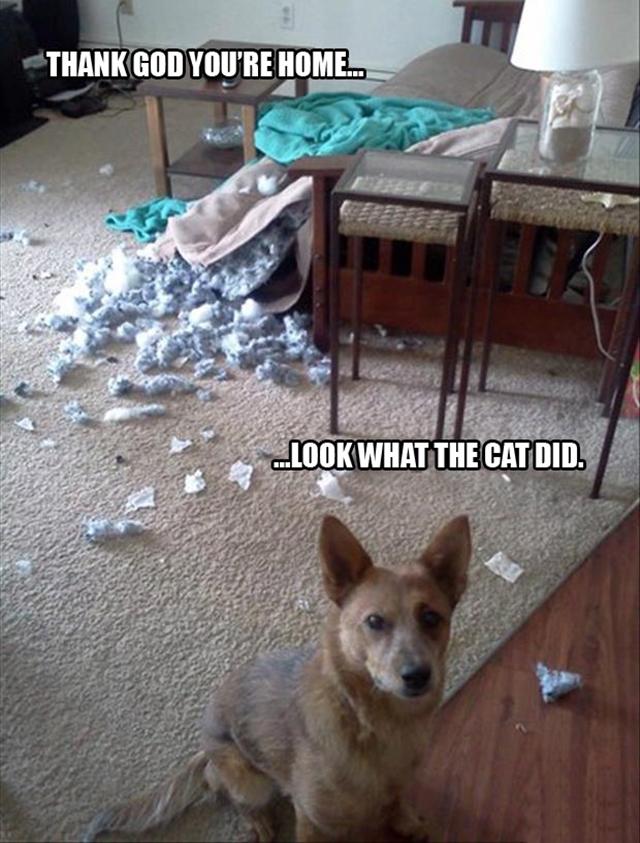 dog-pillow-exploded-funny-animal-hund-kissen-explodiert-9i