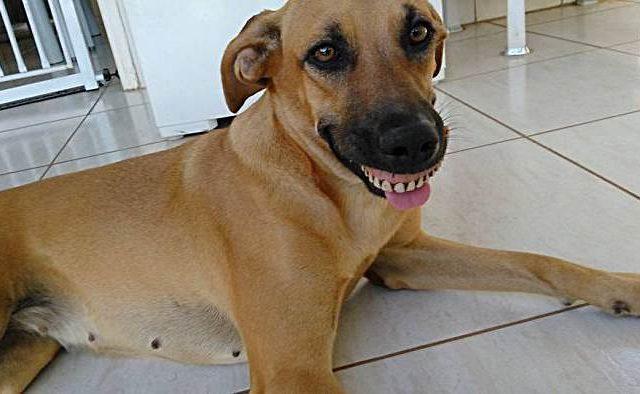 Hundebesitzer vor Lachen fast gestorben