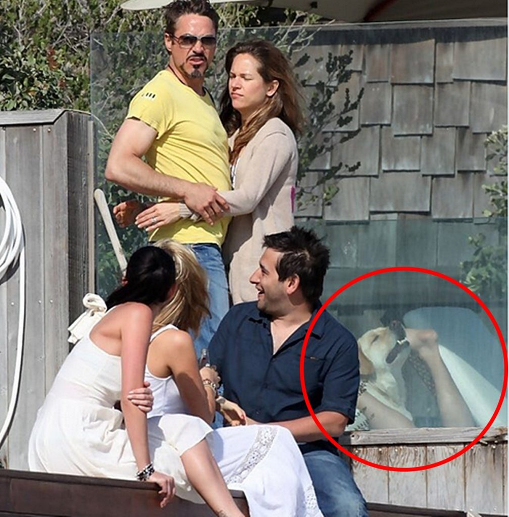 robert downey jr iron man dog hund sex skandal funny tony stark marvel