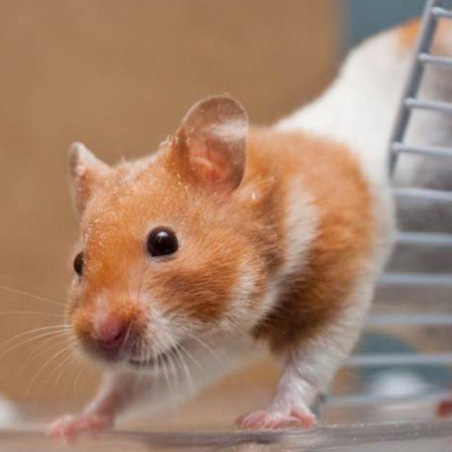 hilfe mein hamster bewegt sich nicht mehr magnet war schuld