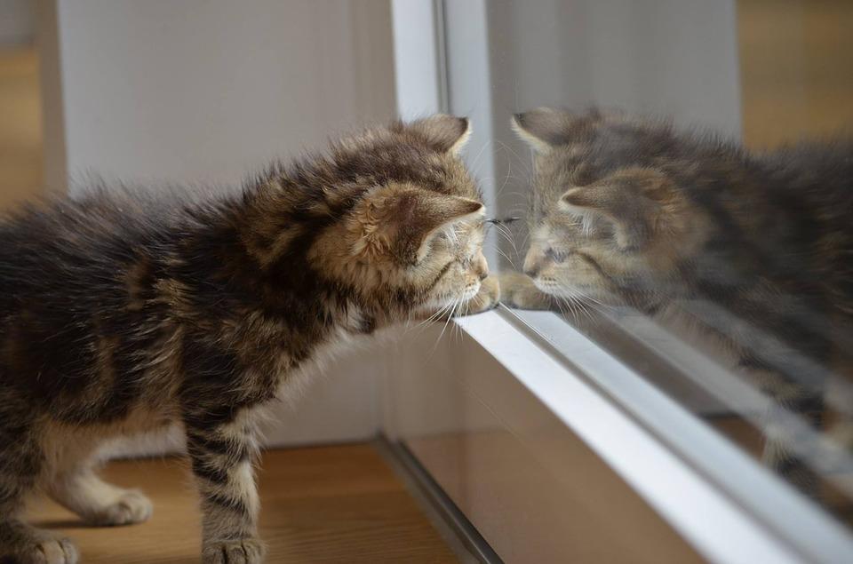 animals-and-mirrors-katze-betrachtet-sich-in-einer-glasscheibe