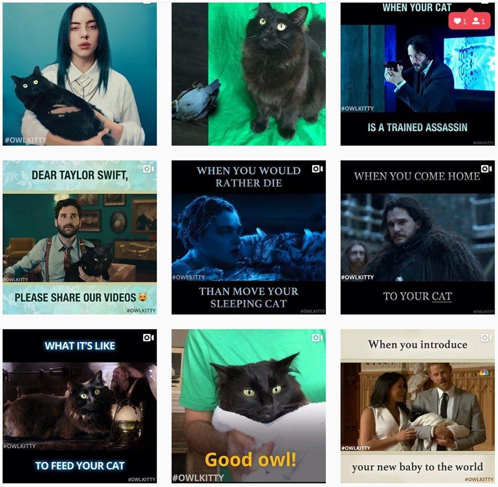 Die Katze OwlKitty ist neuer Hollywoodstar und begeisert hunderttausende von Fans auf Instagram als owl_kitty avengers game of thrones