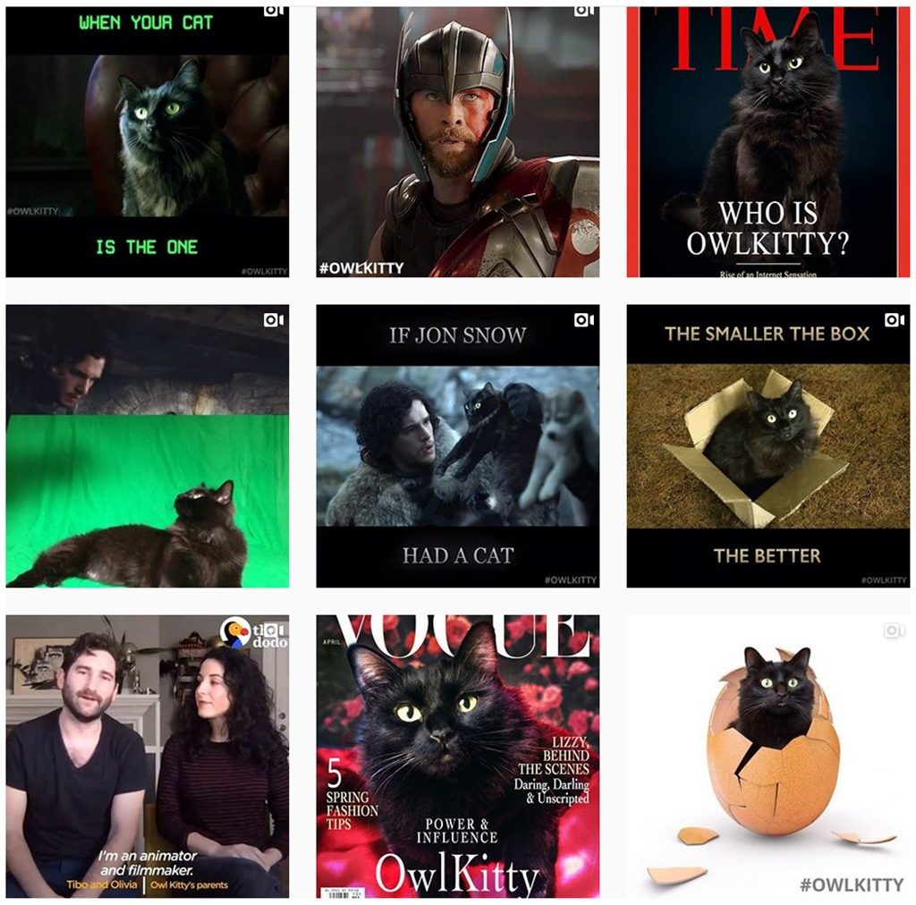 Diese Katze hat es einfach drauf. Aber wer ist diese OwlKitty Katze die in diversen Film und Serien Auschnitte mitspieltt aus Instagram überhaupt