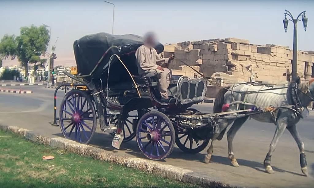 In Ägypten quält man Tiere für Touristen. Hitze Staub Schläge Kein Wasser. Halbtote Tiere die man mit aller Gewalt auf die Beine prügelt. Ägypten von seiner anderen Seite.