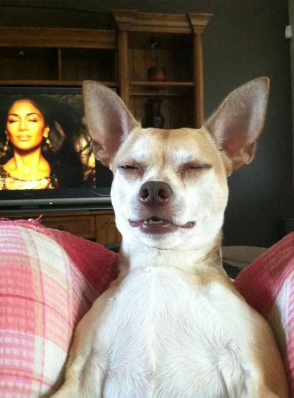 Hund grinst nur doof