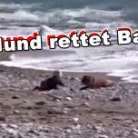Hund rettet Baby vor dem Ertrinken im Meer