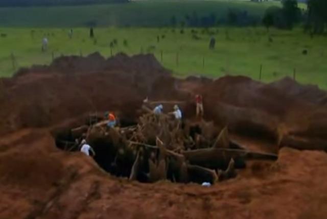 Riesiger Ameisenhügel ausgegraben – Größte Ameisennest der Welt
