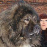 Epic Big Lap-Dog Collection - Riesige Schoßhunde als Haustiere