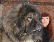 Epic Big Lap-Dog Collection - Riesige Schoßhunde als Haustiere