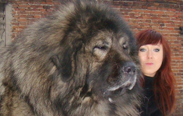 a-very-big-dog