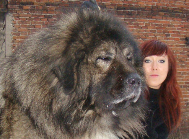 a-very-big-dog