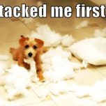 Wenn Kissen einfach so explodieren - Dog and the exploded Pillows