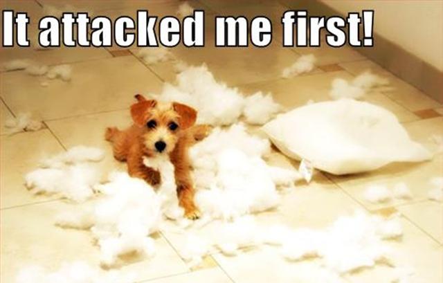 Wenn Kissen einfach so explodieren – Dog and the exploded Pillows