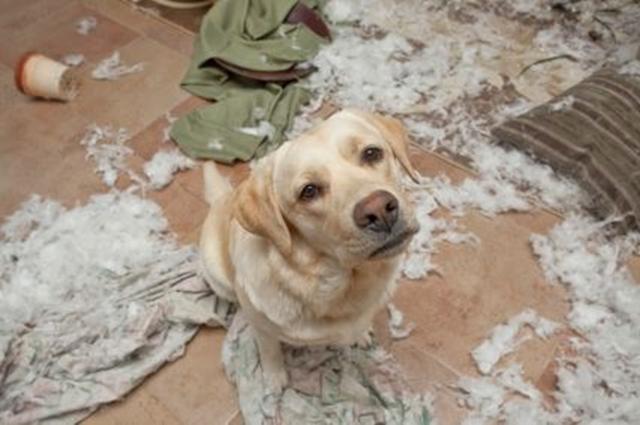 dog-pillow-exploded-funny-animal-hund-kissen-explodiert-6