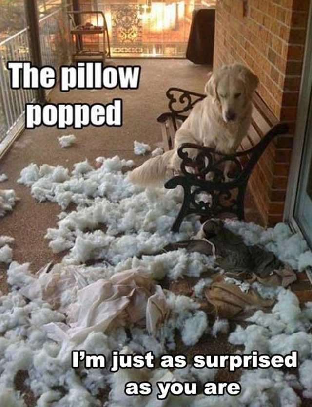 dog-pillow-exploded-funny-animal-hund-kissen-explodiert-7