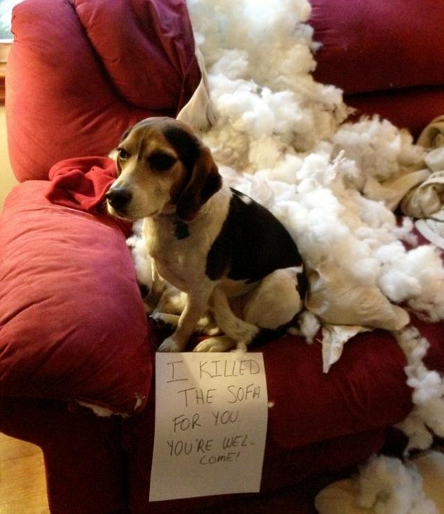 dog-pillow-exploded-funny-animal-hund-kissen-explodiert-9b