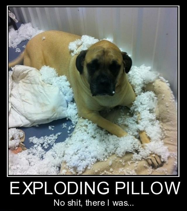 dog-pillow-exploded-funny-animal-hund-kissen-explodiert-9c