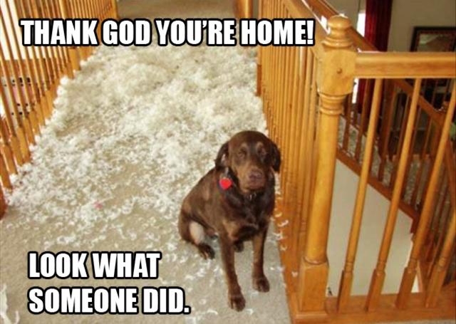 dog-pillow-exploded-funny-animal-hund-kissen-explodiert-9d