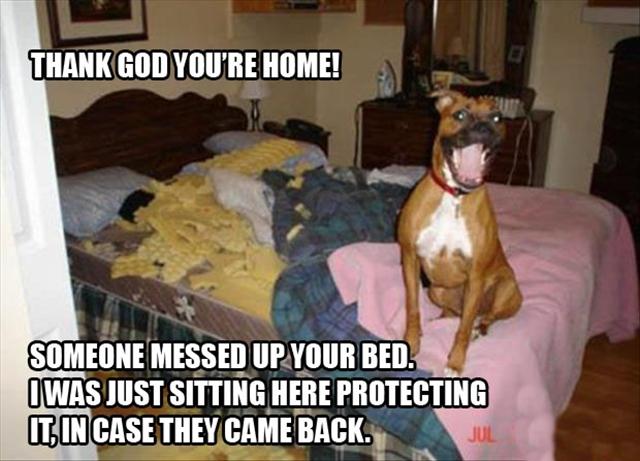 dog-pillow-exploded-funny-animal-hund-kissen-explodiert-9e
