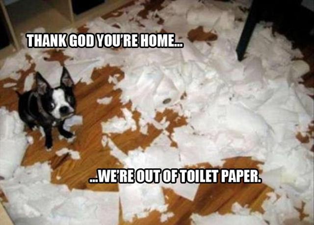 dog-pillow-exploded-funny-animal-hund-kissen-explodiert-9f