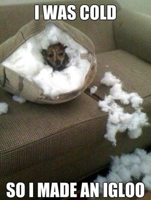 dog-pillow-exploded-funny-animal-hund-kissen-explodiert-9j