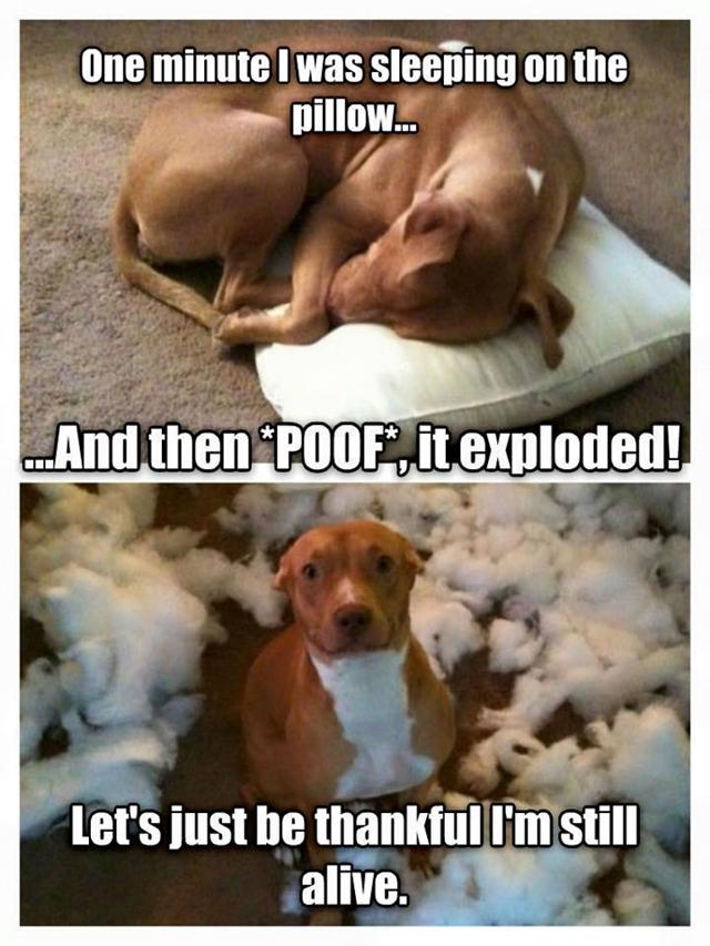 dog-pillow-exploded-funny-animal-hund-kissen-explodiert