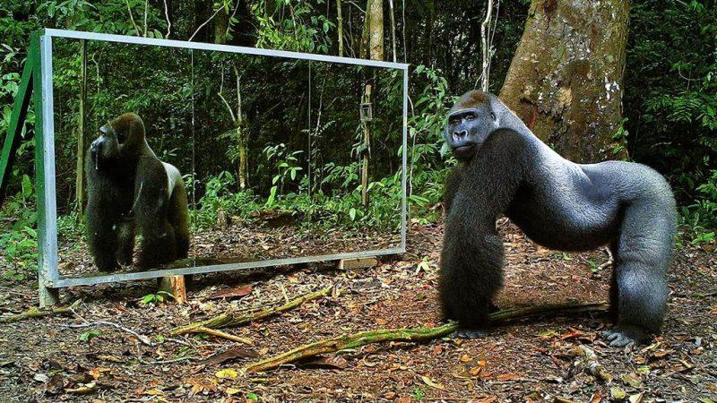 Animals and Mirrors – Erkennen die Tiere sich selber ?