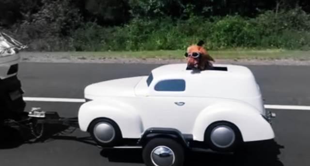 Hund fährt Auto auf der Autobahn