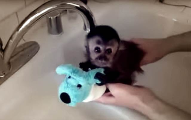 nass-niedlich-mini-affe-gebadet-cute-sweet-animals-are-awesome