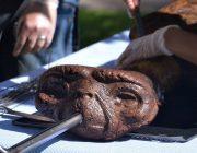 E.T. der Ausserirdische wurde gegessen - Skandal News