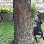 Hund und Eichhörnchen Dog and Squirrel Lustiges Video Funny Video am Baum