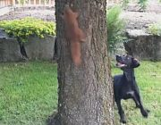 hund frisst eichhönchen lebendig dog eats squirrel Hund und Eichhörnchen Dog and Squirrel Lustiges Video Funny Video am Baum