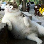 Lustige Katzen zum totlachen Katzenvideos