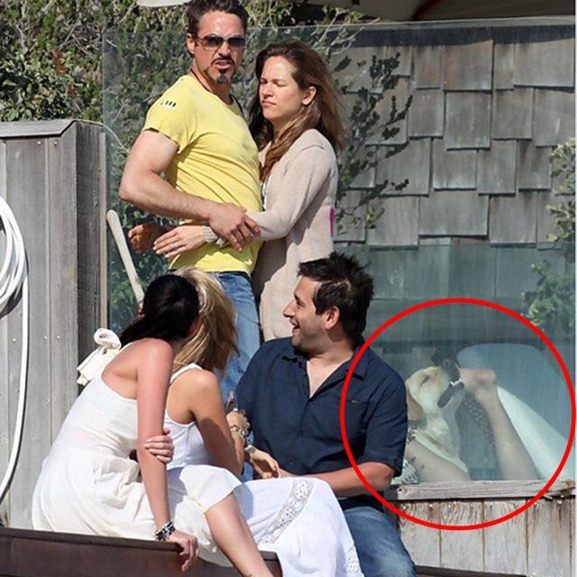 Hund stielt Robert Downey Jr die Show