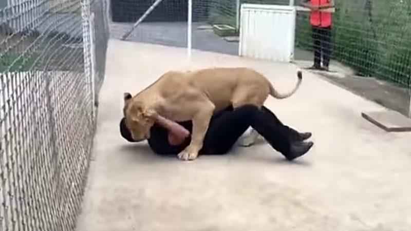 Dieser Mann steigt ins Löwengehege. Was dann passiert ist einfach unglaublich.