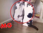 brutaler kampf zwischen zwei katzen most brutal cat fight ever