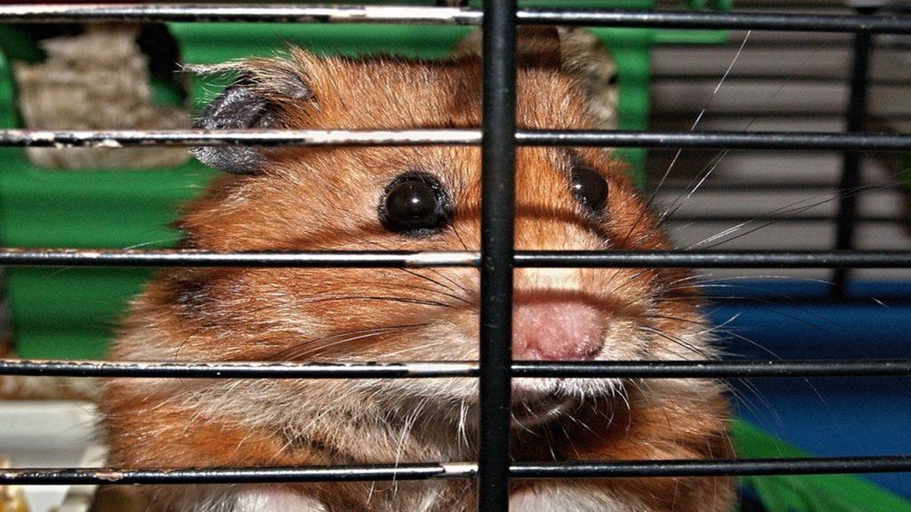 Hilfe mein Hamster bewegt sich nicht mehr