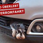 Zwergschnauzer steckt zehn Stunden in Kühlergrill fest