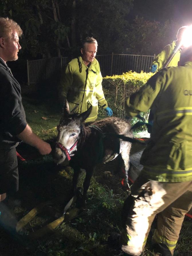 Feuerwehr rettet Esel aus Klärgrube Australien