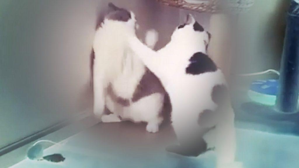 Brutaler Kampf zwischen zwei Katzen