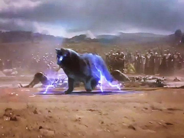 Katze OwlKitty ist neuer Hollywoodstar und begeistert Instagram Fans