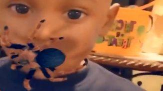 kleiner junge hat riesige spinne im gesicht und seine eltern lachen nur smartphone app vogelspinne auf kind