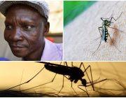 Joe Rwamirama from Kampala seine Fürze töten Mücken innerhalb von 6 Metern Farmaindustrie bezahlt in dafür Moskitos sterben in seiner Nähe