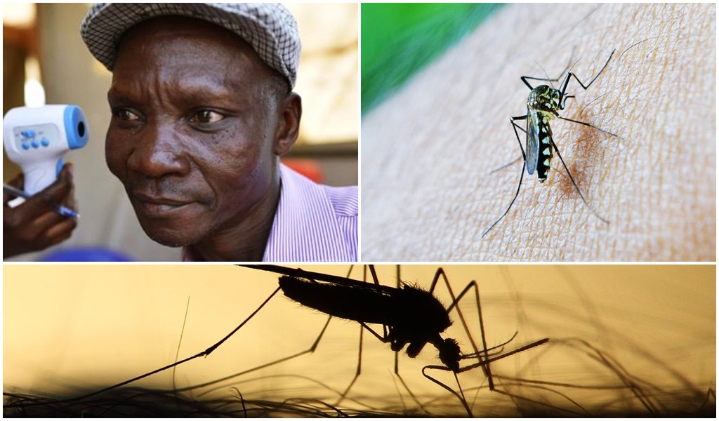 Mann, dessen Fürze Mücken töten können, bekommt Millionen von der  Mückenschutz-Industrie