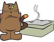 Katze misstraut der selbstreinigenden Katzentoilette noch etwas